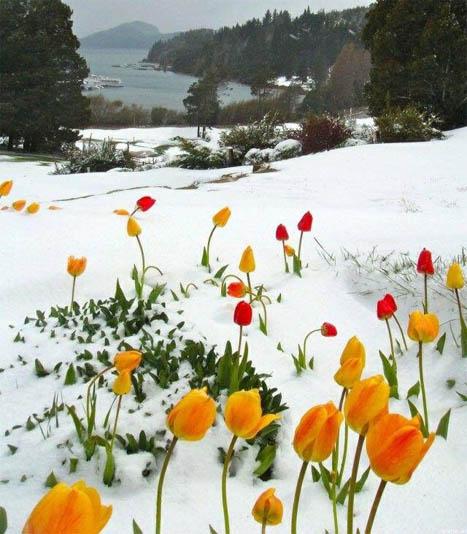 Картинки на аву зима и зимняя пора - прикольные, красивые и классные 4