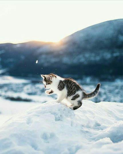 Картинки на аву зима и зимняя пора - прикольные, красивые и классные 9