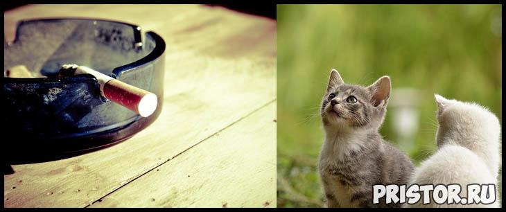 Кошки и табачный дым - влияние курения на организм кошек 2