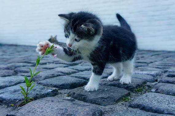 Красивые картинки кошек и котов - скачать, смотреть бесплатно 16