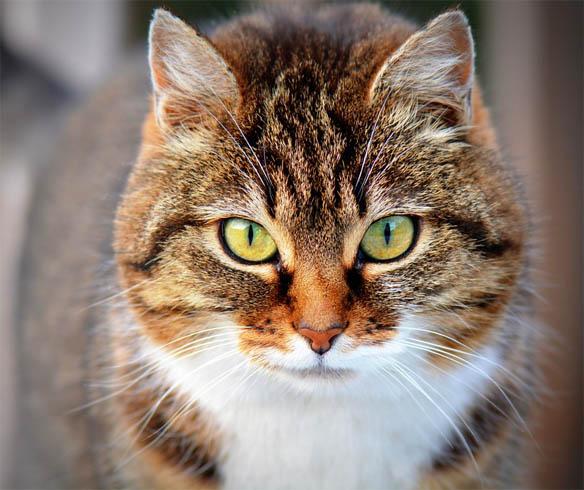 Красивые картинки кошек и котов - скачать, смотреть бесплатно 3