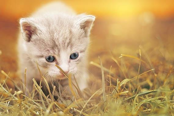 Красивые картинки кошек и котов - скачать, смотреть бесплатно 4