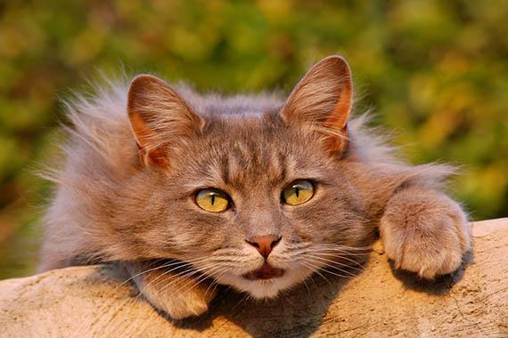 Красивые картинки кошек и котов - скачать, смотреть бесплатно 8
