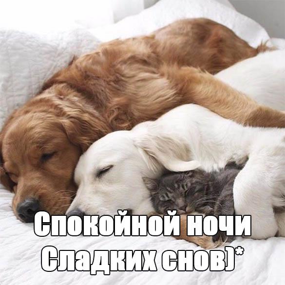 Нежные пожелания спокойной ночи любимому - скачать бесплатно 4