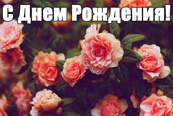 Поздравления с юбилеем свекрови от невестки - красивые и прикольные 1