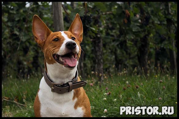 Почему собаки лают без причины или на чужих - основные причины 3