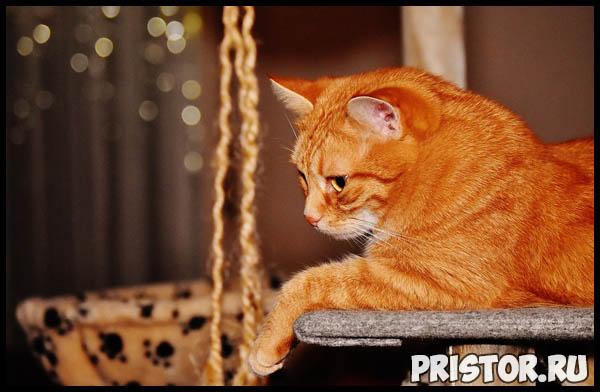 Правильное питание для кошек - основной рацион и главные секреты 1