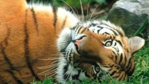 Смешные картинки с надписями про животных - веселые и прикольные 7