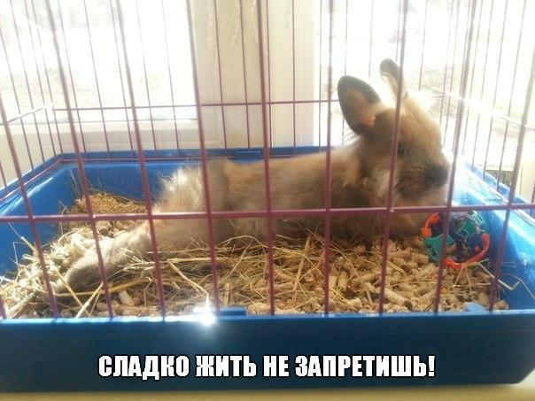 Выходные у животных - смешные и прикольные фотографии, картинки 7