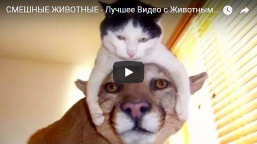 Забавные и смешные видео про животных - новые, свежие, подборка №21