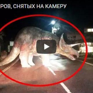 Интересное видео про 10 динозавров, которые были сняты на камеру