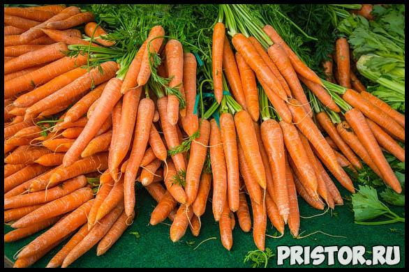 Как выращивать морковь в открытом грунте - основные советы и уход 2
