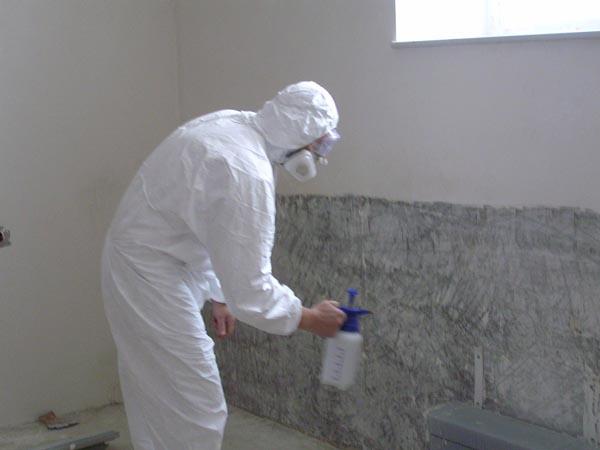 Как избавиться от грибка на стенах в домашних условиях - лучшие способы 1
