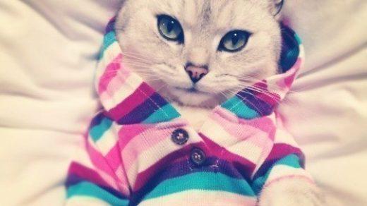 Картинки на аву кошки и котики - самые прикольные и красивые 1