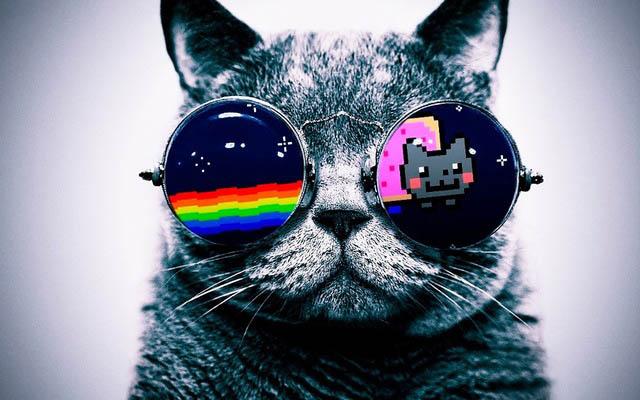 Картинки на аву кошки и котики - самые прикольные и красивые 10