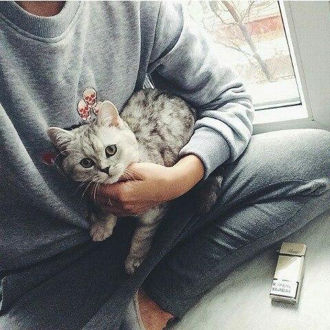 Картинки на аву кошки и котики - самые прикольные и красивые 14