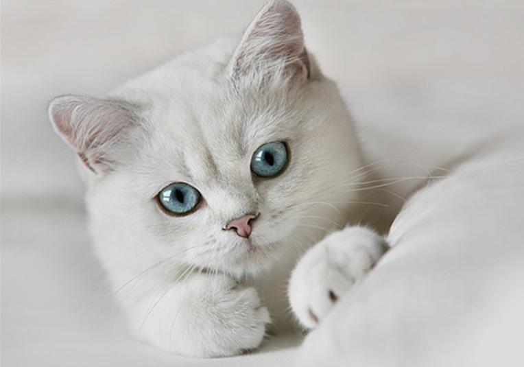 Картинки на аву кошки и котики - самые прикольные и красивые 16