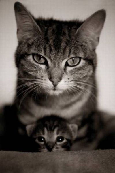 Картинки прикольные коты на аву