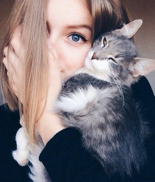 Картинки на аву кошки и котики - самые прикольные и красивые 8