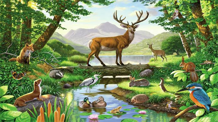 Красивые картинки леса для детей - смотреть, скачать бесплатно 13
