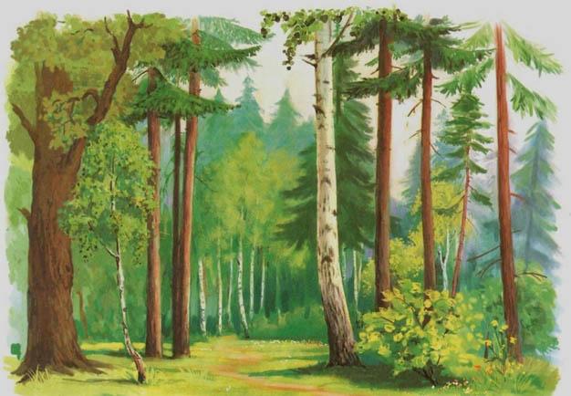 Красивые картинки леса для детей - смотреть, скачать бесплатно 2