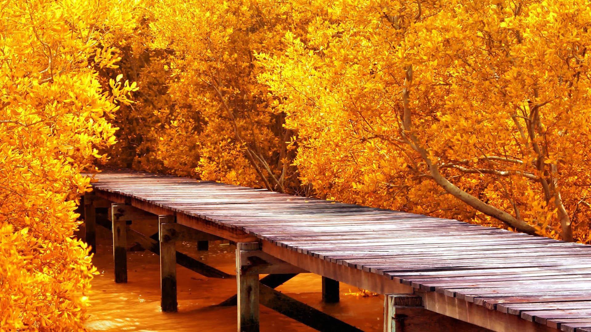 Красивые обои осени на рабочий стол - скачать бесплатно, подборка 9