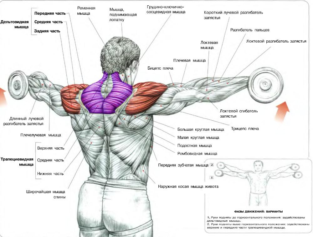 Лучшие и эффективные упражнения на плечи дома и в зале 5