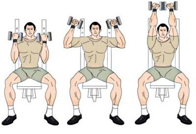 Лучшие и эффективные упражнения на плечи дома и в зале 6