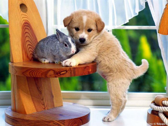 Милые зверюшки - самые прикольные и веселые фото, подборка №2 11