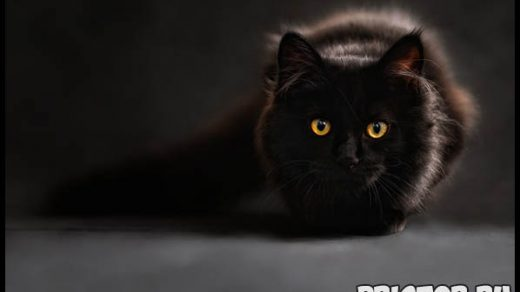 Необычные и интересные приметы, суеверия про черных кошек 1