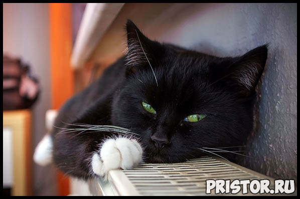 Необычные и интересные приметы, суеверия про черных кошек 2