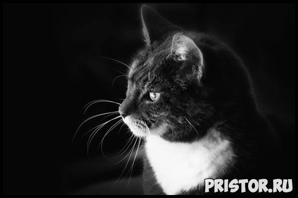 Необычные и интересные приметы, суеверия про черных кошек 3