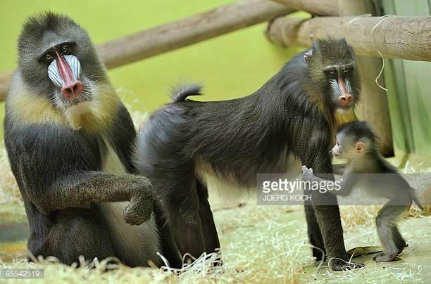 Позитивные и прикольные фото из зоопарка - смотреть бесплатно 1