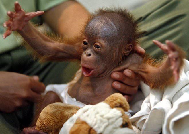 Позитивные и прикольные фото из зоопарка - смотреть бесплатно 11