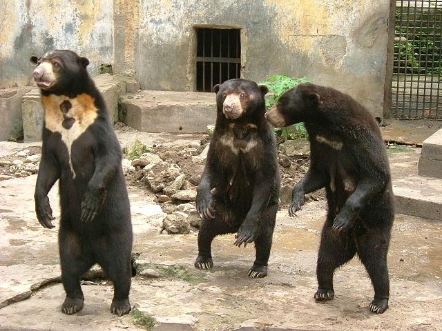 Позитивные и прикольные фото из зоопарка - смотреть бесплатно 13