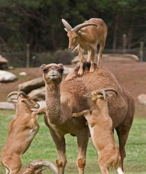 Позитивные и прикольные фото из зоопарка - смотреть бесплатно 15