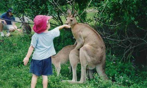 Позитивные и прикольные фото из зоопарка - смотреть бесплатно 17