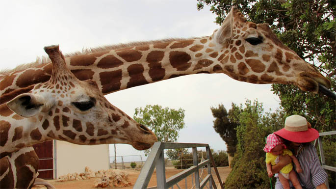 Позитивные и прикольные фото из зоопарка - смотреть бесплатно 19