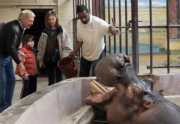 Позитивные и прикольные фото из зоопарка - смотреть бесплатно 20