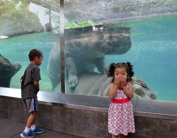Позитивные и прикольные фото из зоопарка - смотреть бесплатно 3