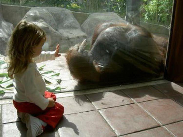 Позитивные и прикольные фото из зоопарка - смотреть бесплатно 4