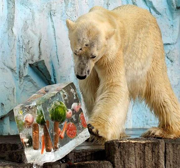 Позитивные и прикольные фото из зоопарка - смотреть бесплатно 5