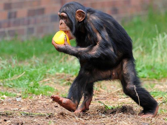 Позитивные и прикольные фото из зоопарка - смотреть бесплатно 6