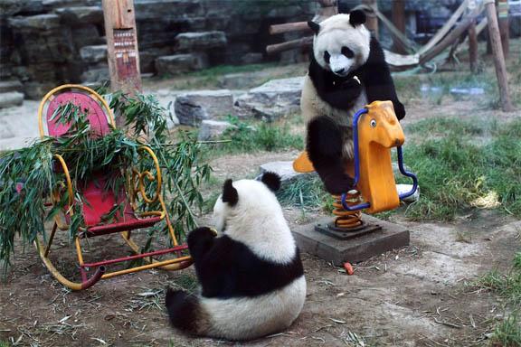 Позитивные и прикольные фото из зоопарка - смотреть бесплатно 8