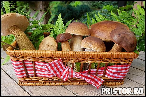 Поход за грибами - как правильно собирать грибы и что взять 3