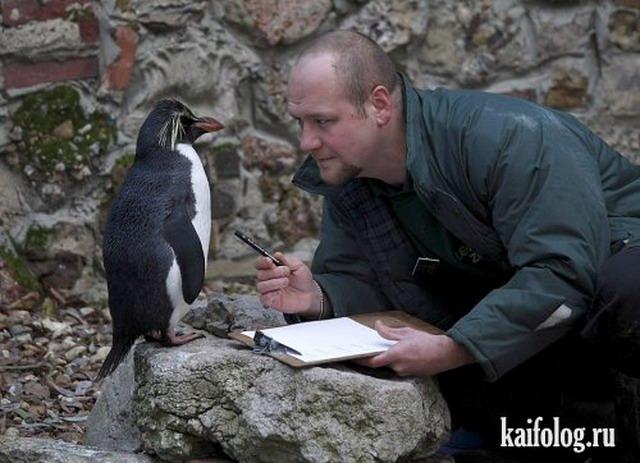 Приколы про пингвинов - смешные и веселые картинки, фото 10