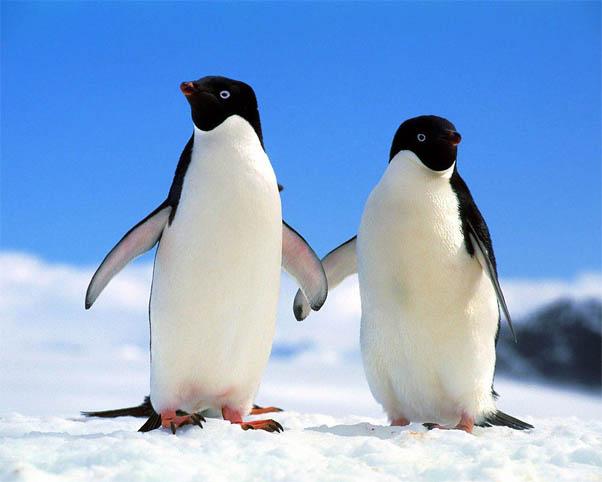 Приколы про пингвинов - смешные и веселые картинки, фото 11