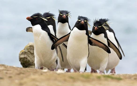 Приколы про пингвинов - смешные и веселые картинки, фото 13