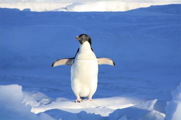 Приколы про пингвинов - смешные и веселые картинки, фото 14