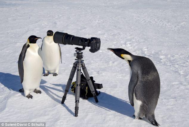 Приколы про пингвинов - смешные и веселые картинки, фото 15